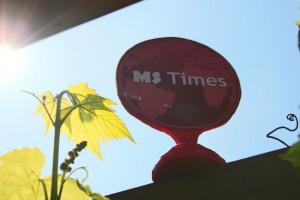 MS Times Preis